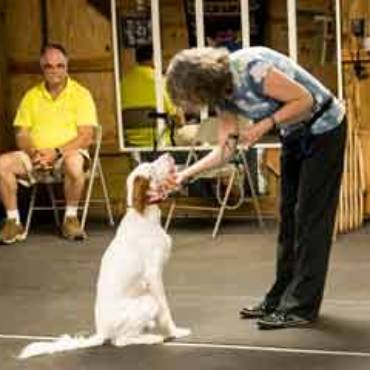 Dog Training Classes Kindred Souls Canine Center