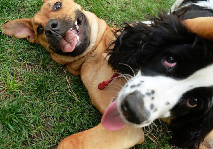 CORONAVIRUS and ADOPTING DOGS