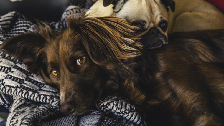 ADOPTING DOGS ~ THE CONCEPTS