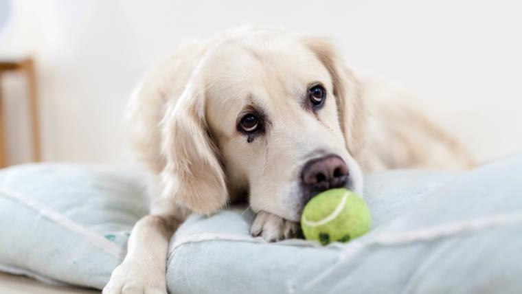 ADOPTING A DOG ~ THE TOOLS