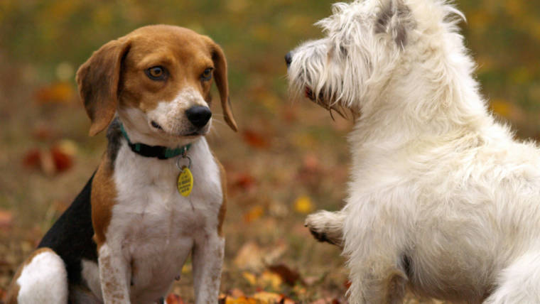 ADOPTING A DOG ~ OTHER PETS